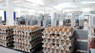 Открыт 12-й магазин птицефабрики «Пионерская» в столице края